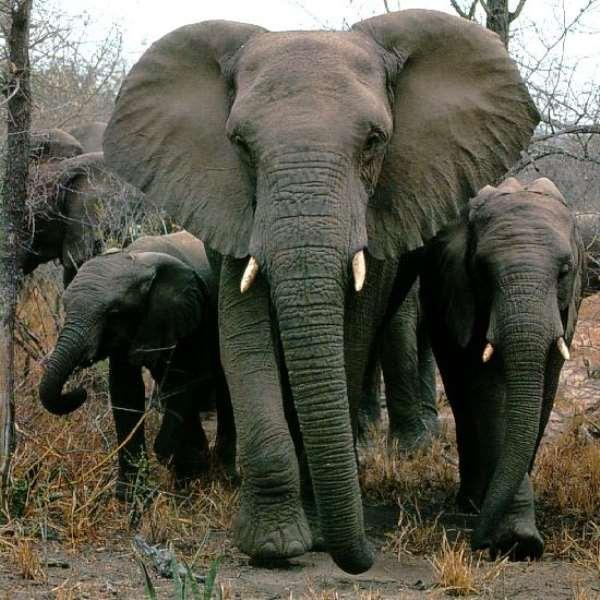 World Animal Protection On The Death Of Hundreds Of Elephants In Botswana