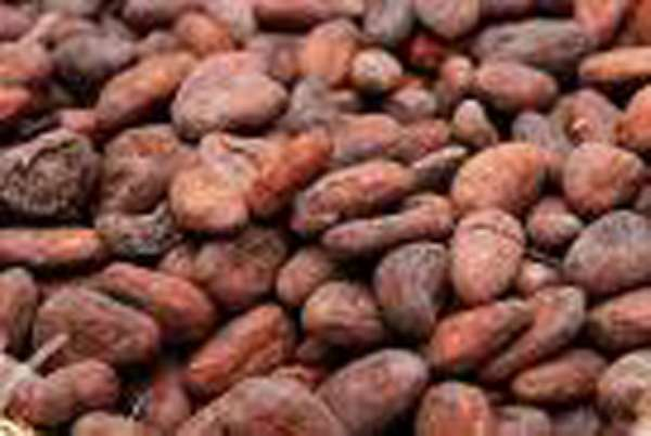 2009 Cocoa Production: 1m Tonnes Targeted