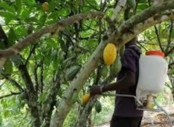 Let us fight the swollen shoot bug - COCOBOD