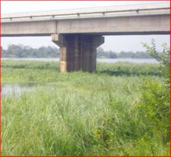 Aquatic weed infestation at Sogakope