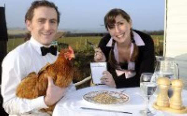 Man sets up hotel for chickens