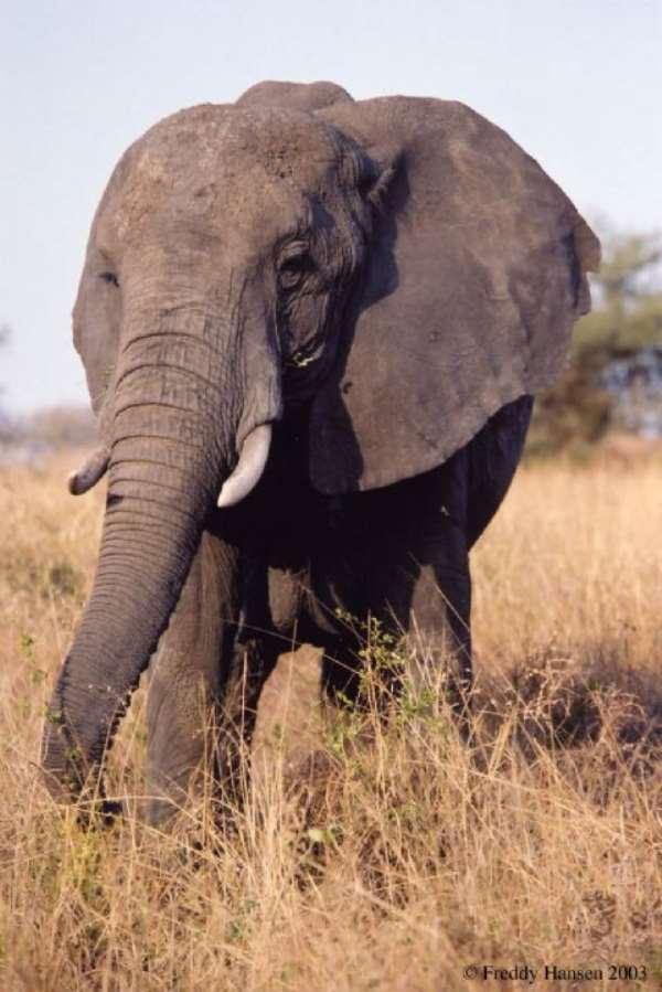 Gov't to Improve Elephant Conservation