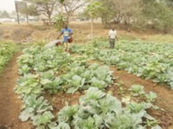 Vegetables Pose Health Hazards