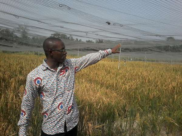 Dr. Maxwell Asante on GM rice confined field