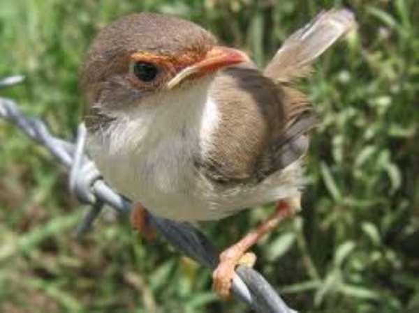 Our Vanishing World: Birds