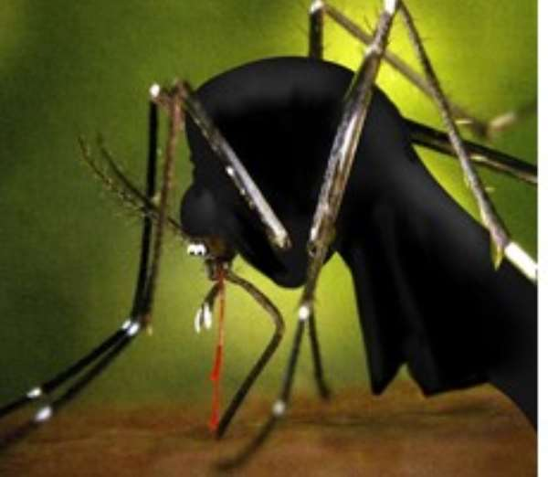 Mosquitoes carry the parasite which causes malaria in humans