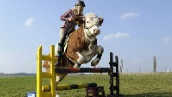15-year-old girl trains a cow to jump