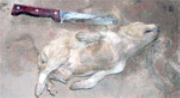 Pastor Buries Live Dog
