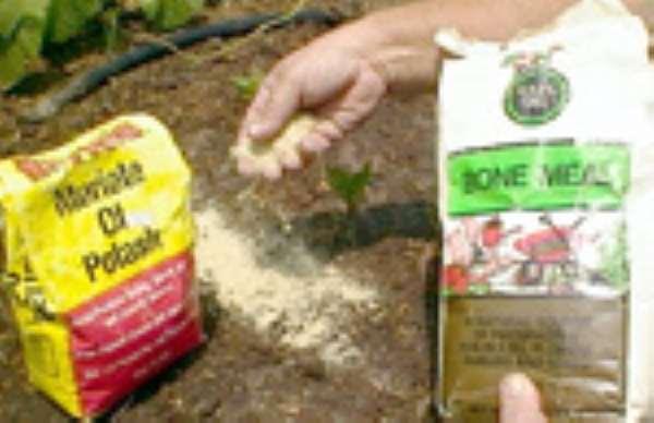 Subsidized Fertilizer To Farmers