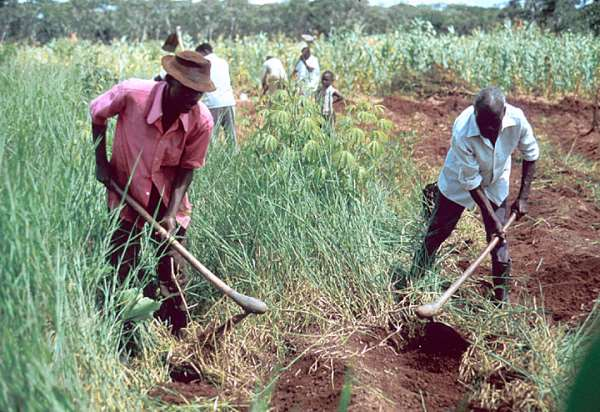 The Great Land Giveaway In Mozambique