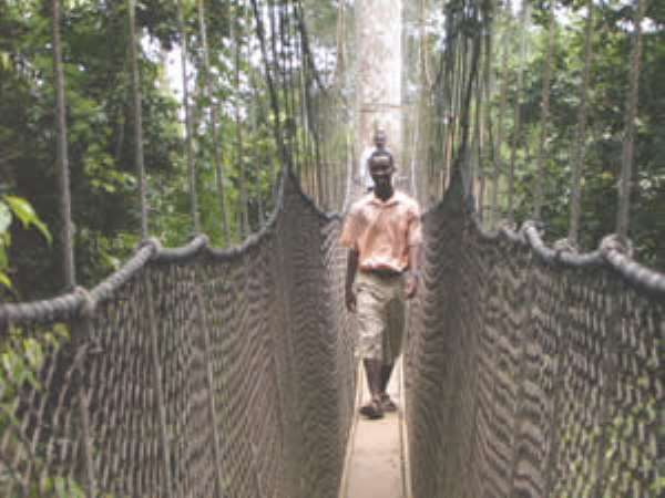 The Canopy walkway at Kakum Park.