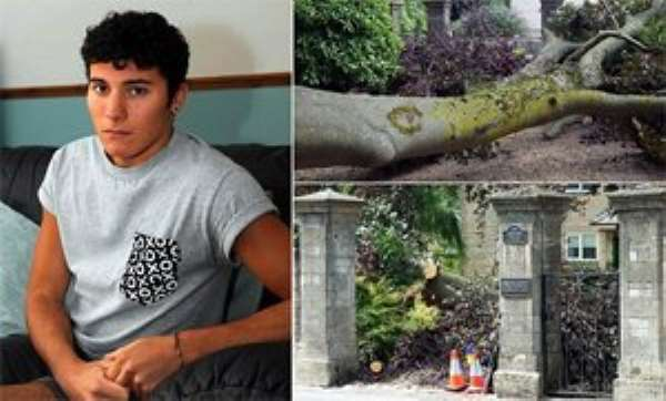 Injured: Student Nick Boulton, 20, was hospitalised after a falling 300-year-old tree fell on his head