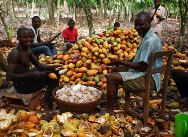 PBC records downturn processing in cocoa beans last year