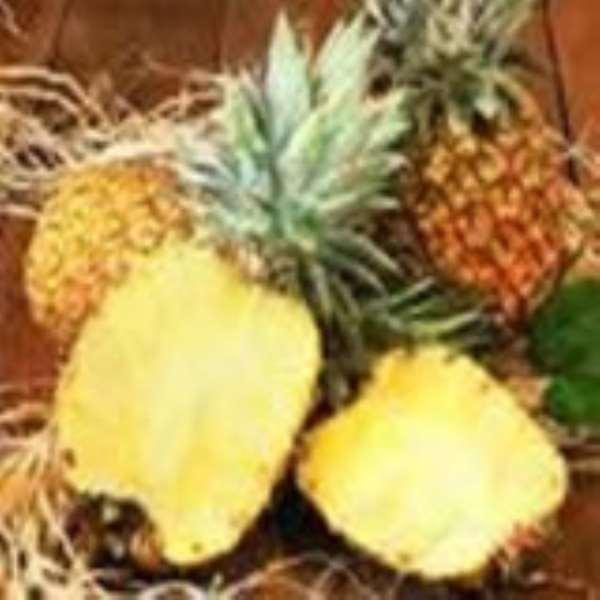 Pineapple farmers object MCA credit