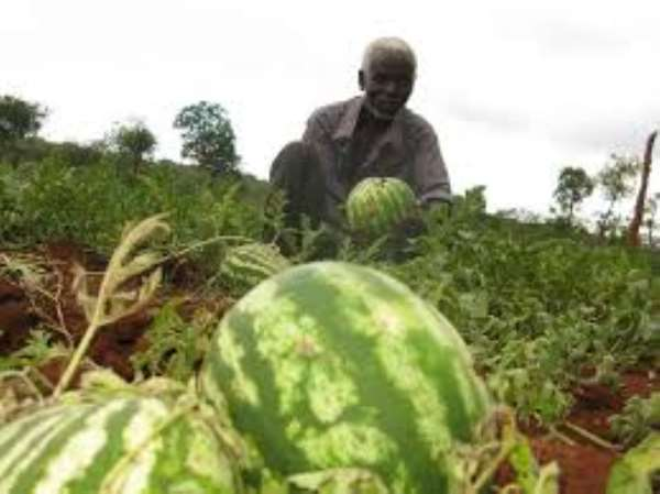 Post-Harvest Loss In Watermelon And Tomatoes In Northern Ghana: A Case Of Seasonal Glut Or Market System Failure?