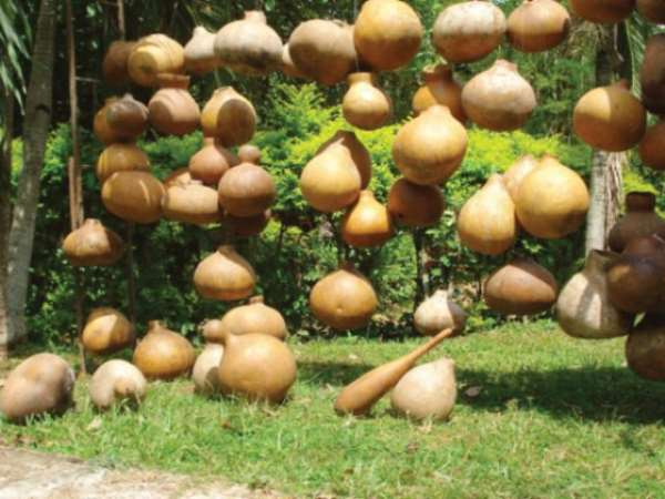 Long live the King, unpainted Calabash Installation, 2009.