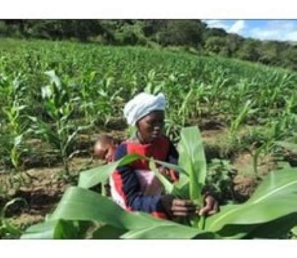 Report: Climate change threatens food security of urban poor
