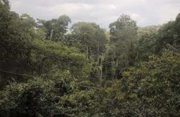 Will It Have To Take A Mass Revolt To Halt The Destruction Of The Atewa Forest Reserve?