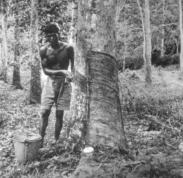 Rubber Plantation Farmers to Earn More Income