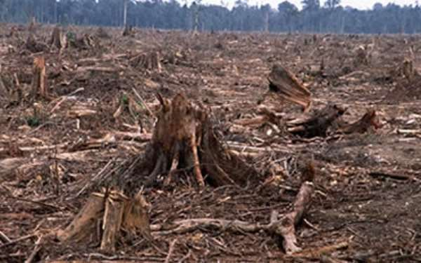 Ghana needs enforceable laws for forest conservation, says CSO
