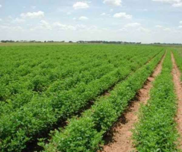 Is Ghana Finally On The Cusp Of Converting Its Agricultural Sector Into Certified And Traceable Organic Production?