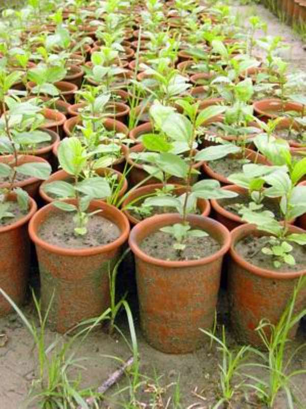 Access To Improved Seeds, The Surest Way To Sustain Government's PFJFs