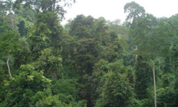 The Kakum Forest in Ghana