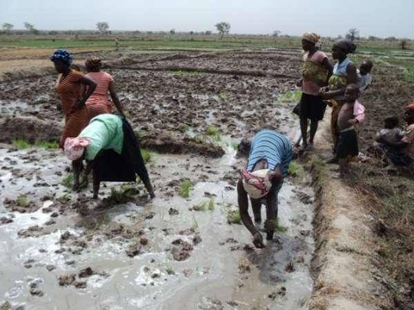 Obuasi East: 65-Year-Old J.B. Tanzienye Adjudged 2019 District Best Farmer