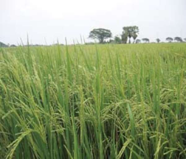 Re: Residents Of Antoa Cry Over Underdevelopment, Takeover Of Farm Lands