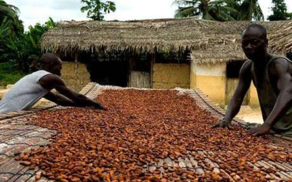 Cocoa Bag Price Below GHC800 Is Insensitivity - Minority