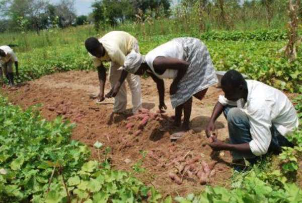 Ghana boosts agricultural financing for higher productivity