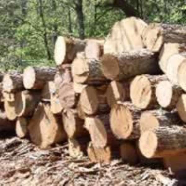 Ghana earns Euro 10,042,257 from wood products in 2010