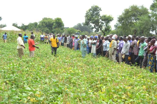 A Senior Research Scientist of CSIR-SARI in charge of the Manga Station, Dr Francis Kusi, conducting the farmers around the demonstration fields and seed plots at Manga