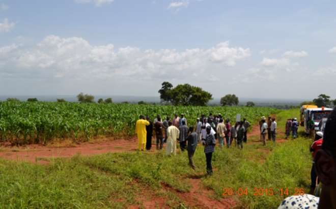 Alhaji Issifou Pangabu At His Farm With Reporters And Out-Growers