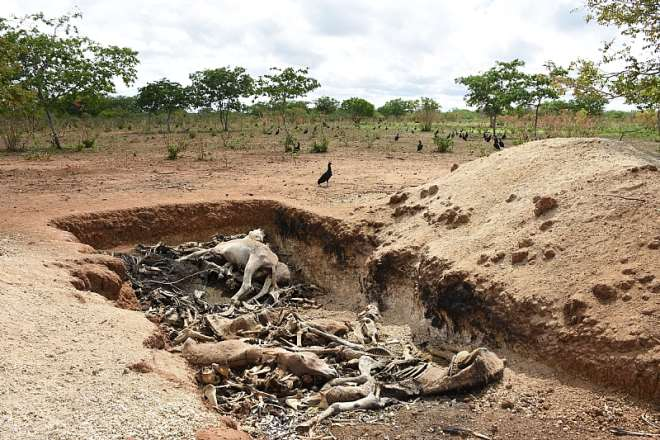 Brazil Corpses. Credit - The Donkey Sanctuary