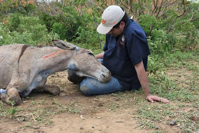Brazil Euthanesia. Credit - The Donkey Sanctuary