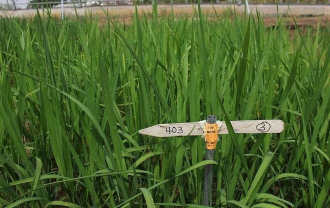 723202020641-osjvm0y442-newest-rice