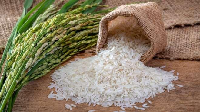 915202053839-h41o2s6fey-rice-image