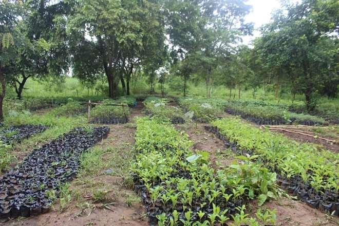 92201944110-l5gsj7v331-tree-planting-2
