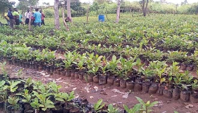 95201963539-1i830o4bau-aama-hands-over-cashew-seedlings2