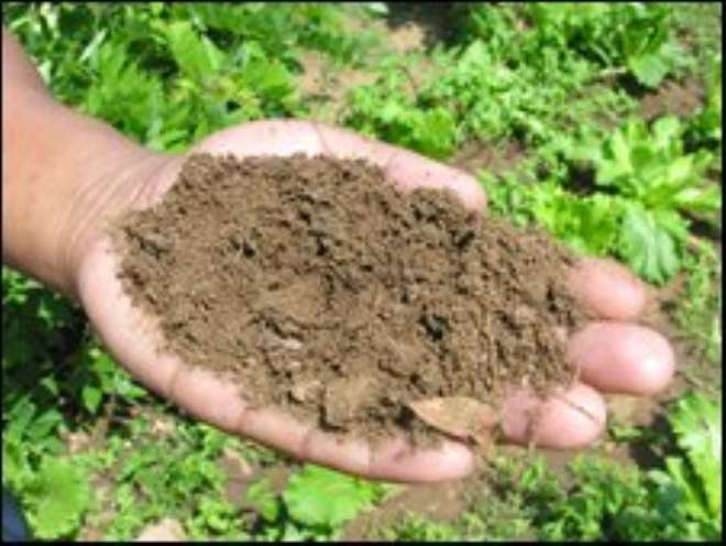 Silt from the fish ponds is used to keep soils fertile for crop planting
