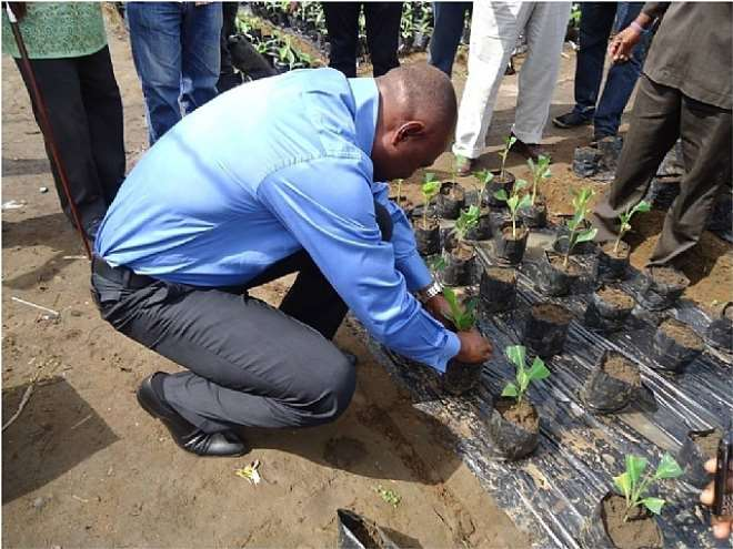AGRIC 10 - THE HON. COMMISSIONER FOR AGRIC. PLANTS A MERISTEM