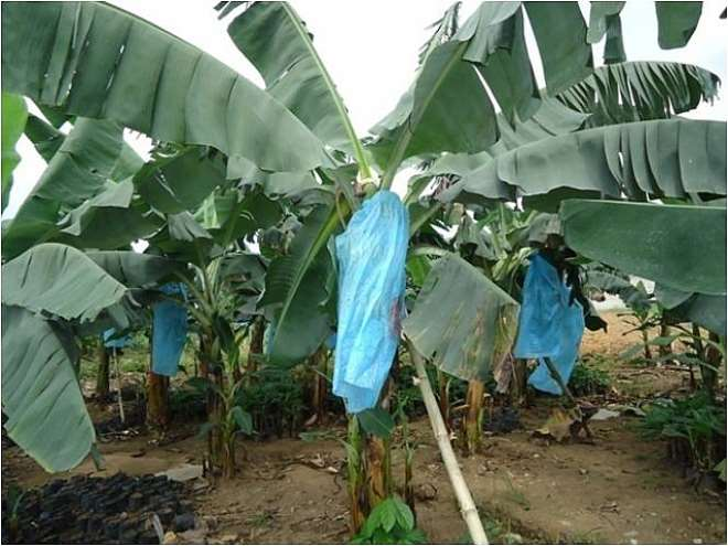 AGRIC 12 - THE PLANTATION TODAY
