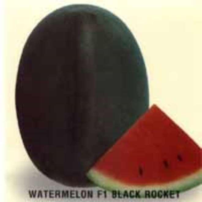 WAT-BLACK ROCKET