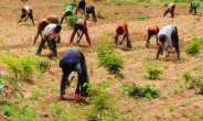 New Project Launched To Help Chadian Farmers Adapt To Climate Change, Boost Agriculture