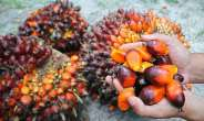 Tocotrienols Contents in Palm Oil is changing the Story