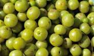 Golden Berries: Block The Growth Of Breast And Colon Cancer Cells In Test-Tube Studies