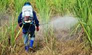 Ghanaians at risk? Studies show a link between cancer and herbicide use in agriculture