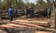 From Galamsey To Rosewood