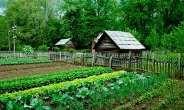 Green Living For Health